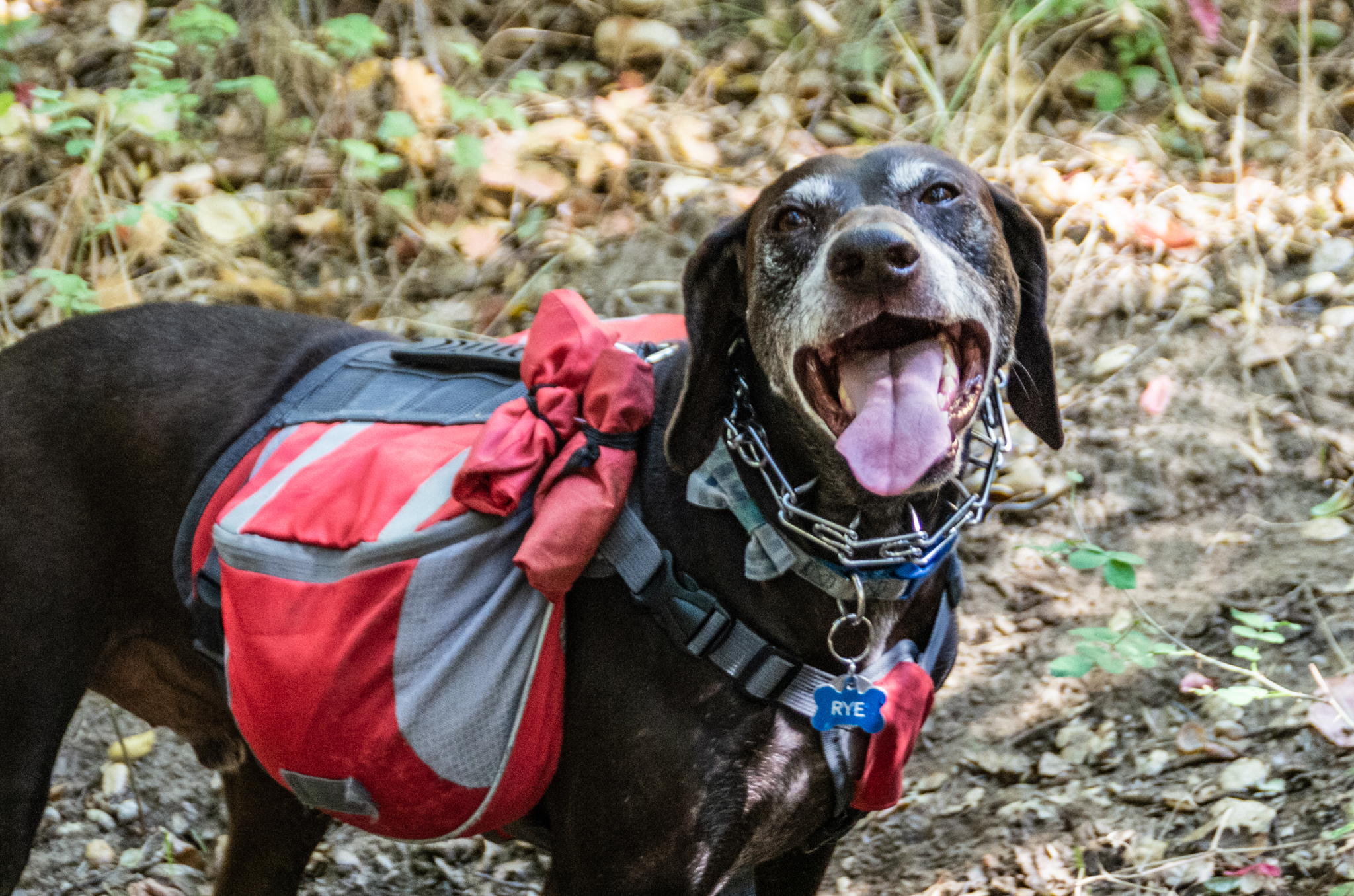 Trek With Your Dog | Answer the call of the wild